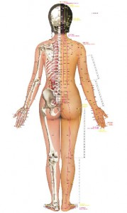 acupuncture_wall_chart