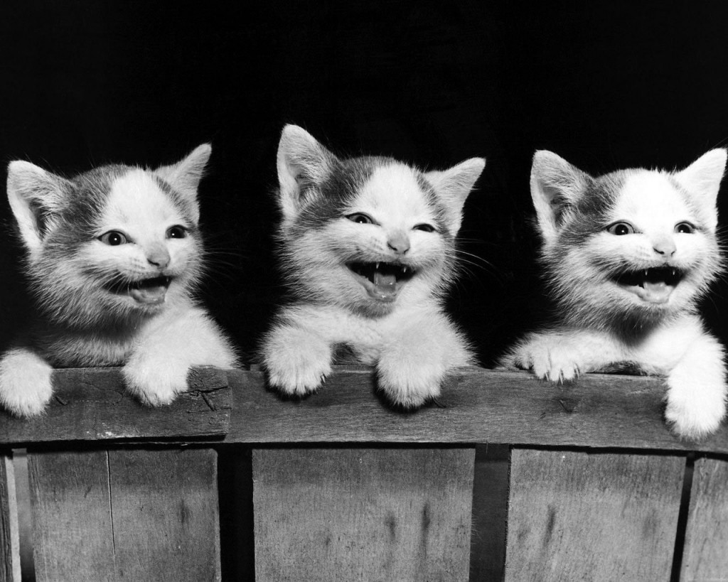 cats laughing