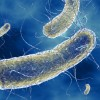 In the News: Drug-related E. coli