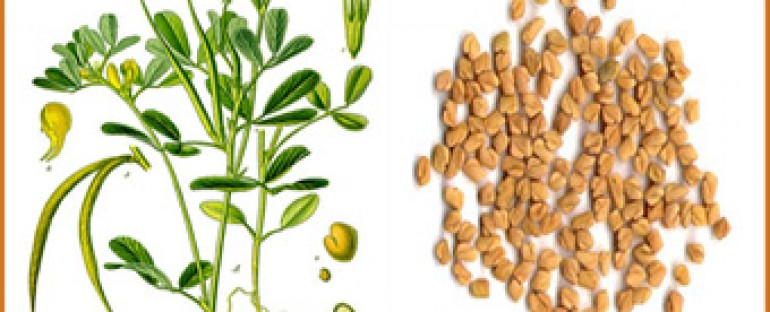 Fenugreek for health and beauty