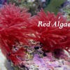 Red the color of heart health