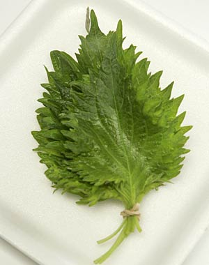Shiso : Substitutes, Ingredients, Equivalents - GourmetSleuth